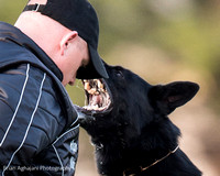 2015 May Working Dog Championship