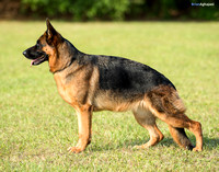 untitled  BA2_9753-Edit Kim Akers